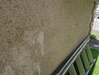 外壁に苔が発生している