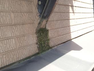 外壁に苔の発生