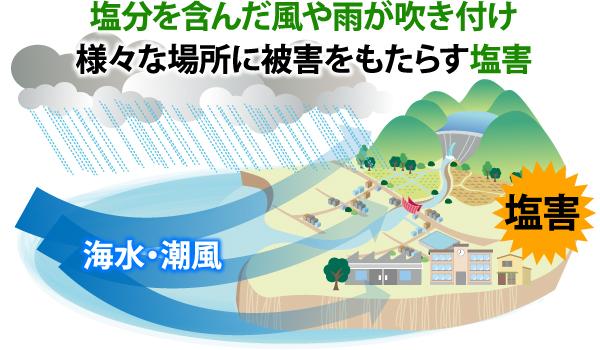 塩分を含んだ風や雨が吹き付け様々な場所に被害をもたらす塩害
