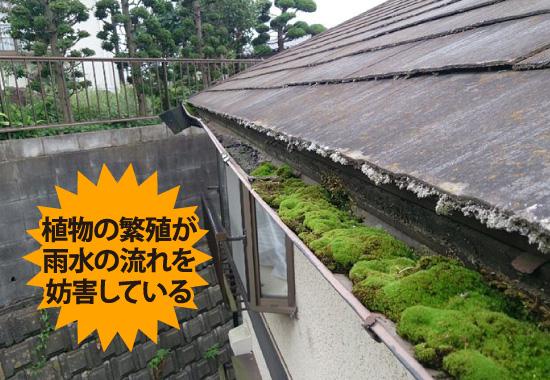 植物の繁殖が雨水の流れを妨害している