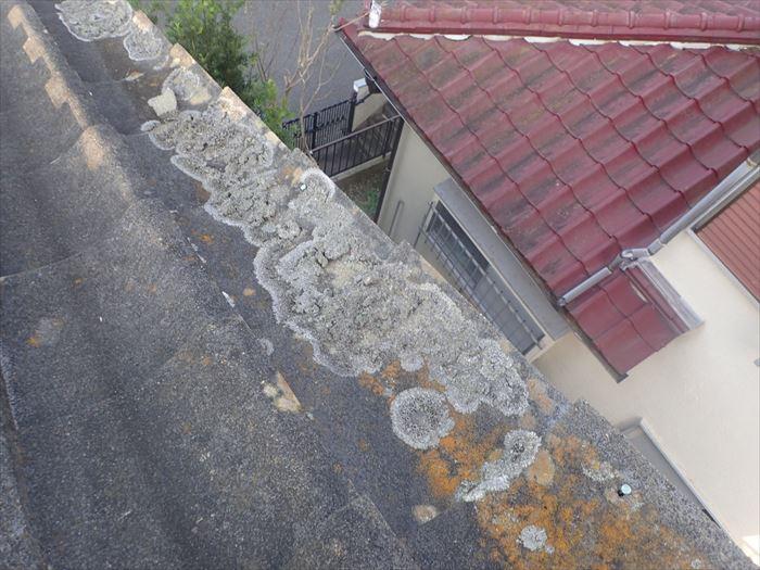 セメント瓦に付着した苔・藻