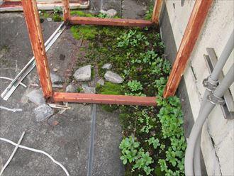 雑草が繁殖している屋上