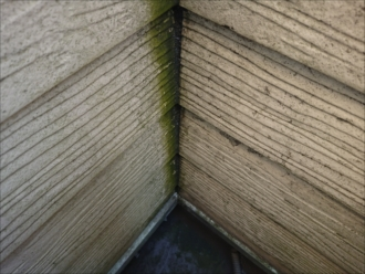 バルコニーの入隅に藻が繁殖した様子