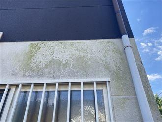 外壁の汚れ