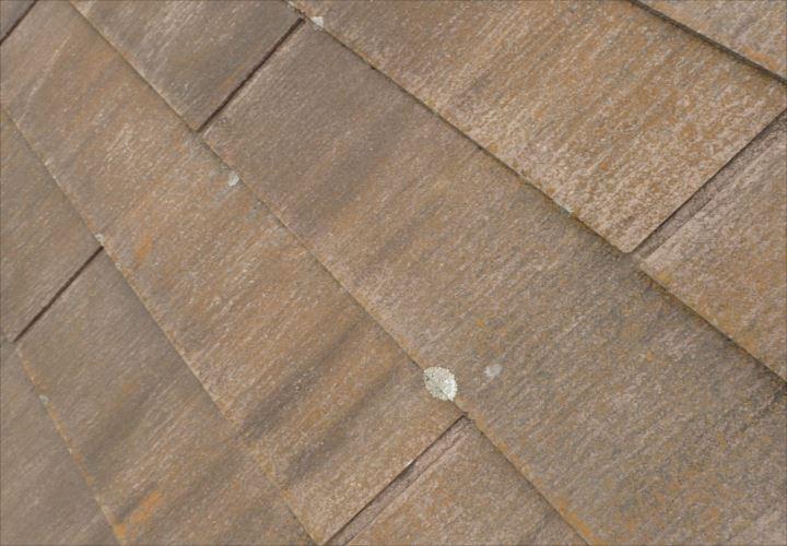 船橋市海神 苔の繁殖