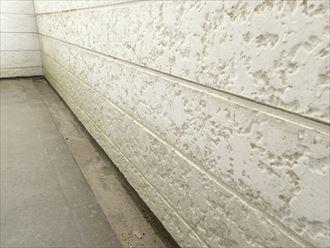 千葉市中央区大森町のアパートの外壁調査、苔とチョーキングの発生
