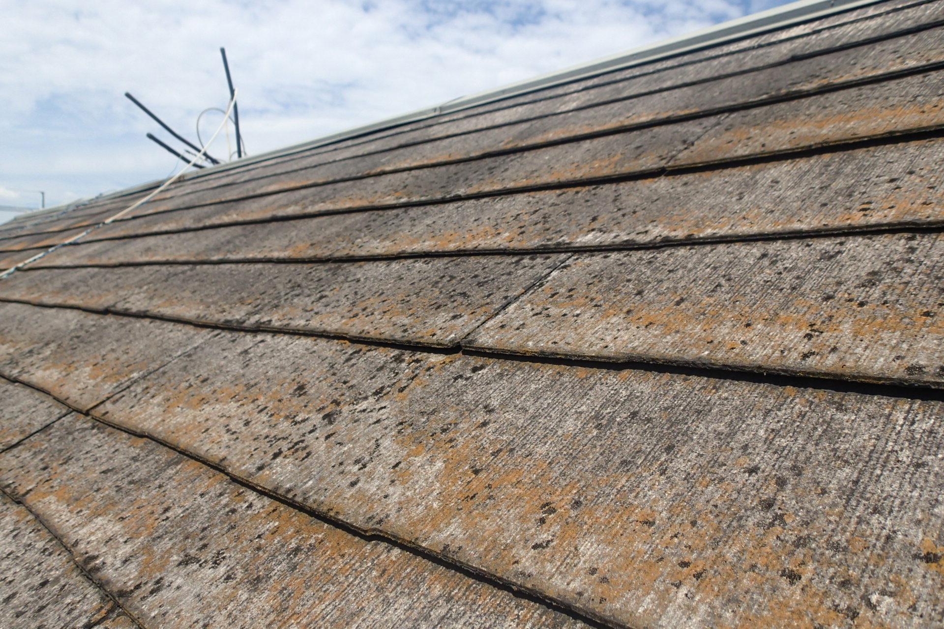 コケの発生した屋根