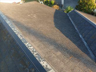 木更津市 屋根に苔の堆積