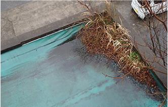 アスファルトやコンクリートから目を出す草花