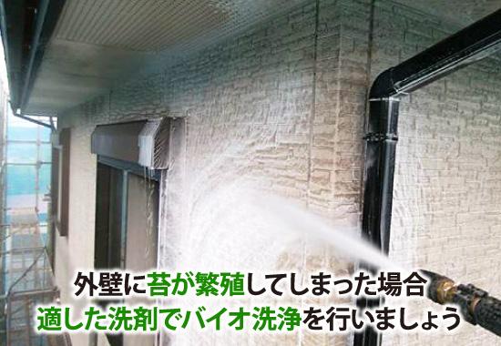 外壁に苔が繁殖してしまった場合、適した洗剤でバイオ洗浄を行いましょう