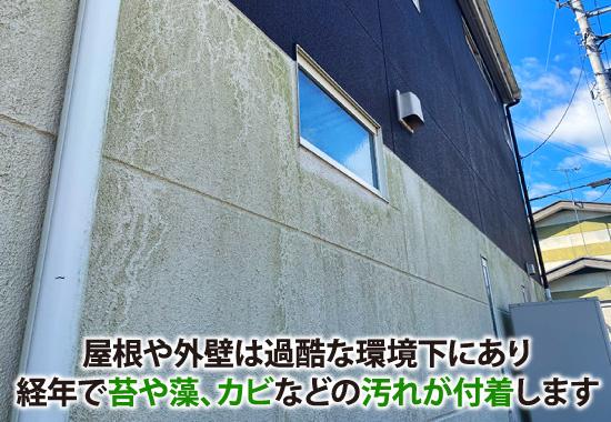 苔や藻、カビなどの汚れが付着した外壁