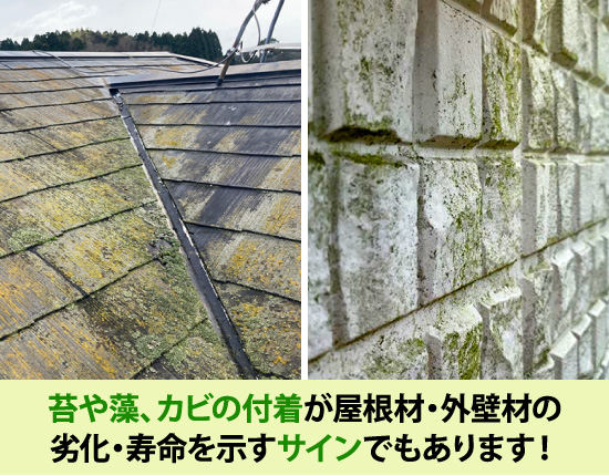苔や藻、カビの付着が屋根材・外壁材の劣化・寿命のサイン