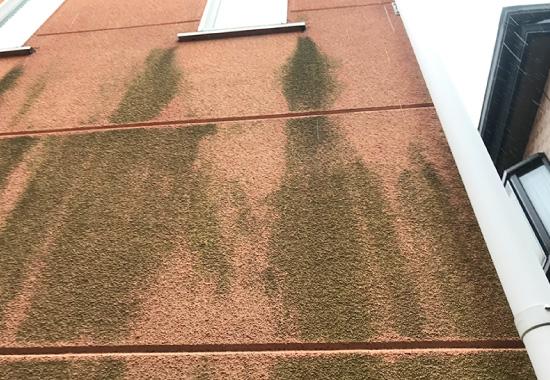 苔、藻、カビが生えた外壁