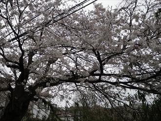 神奈川県逗子市で雨漏りの原因調査