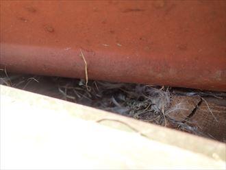 雀の巣,撤去