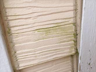 外壁,サイディング,苔