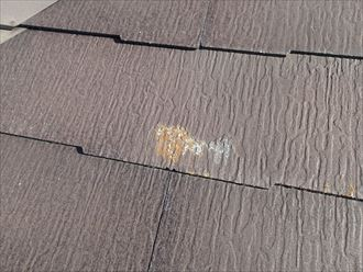 屋根材,苔,付着